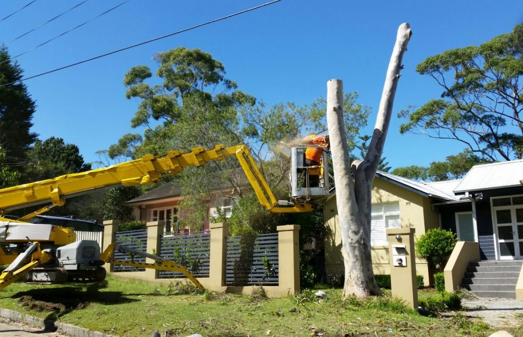 Why do homeowners need professional tree removal services?