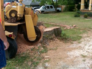 Convenient Tree Removal Services