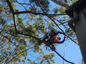 Why professional tree pruning services are required?