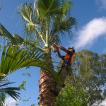 Get 24/7 Services from Professionals at Tree Removal Services Company