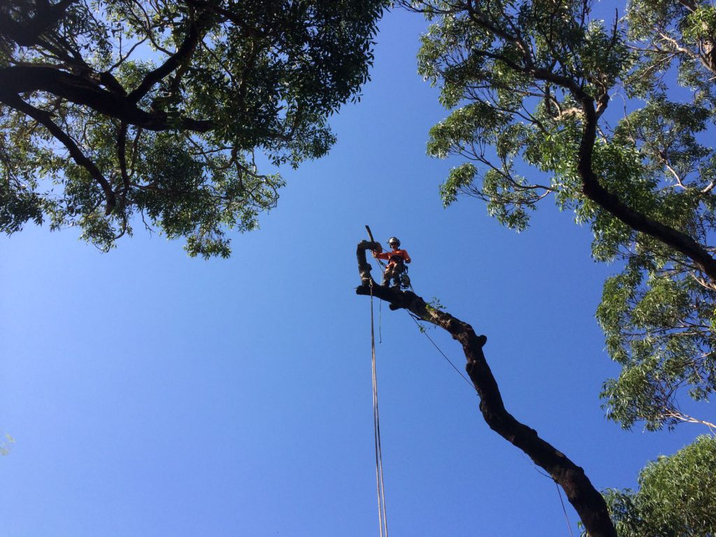 How to Find the Best Quality of Tree Removal Services?