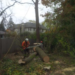 Importance of Tree Removal in Cities