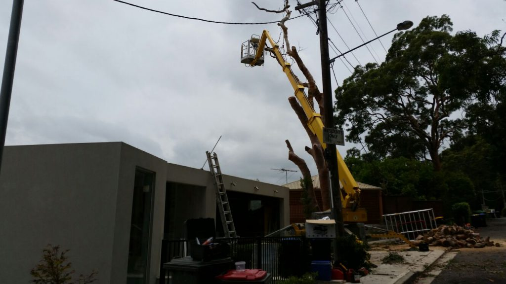 How to get prepared for tree removal works?