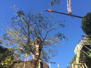 How you should choose the best emergency tree removal services?
