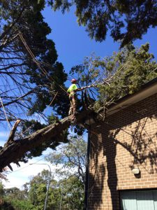 Why should you remove the tree stumps by hiring professional services?