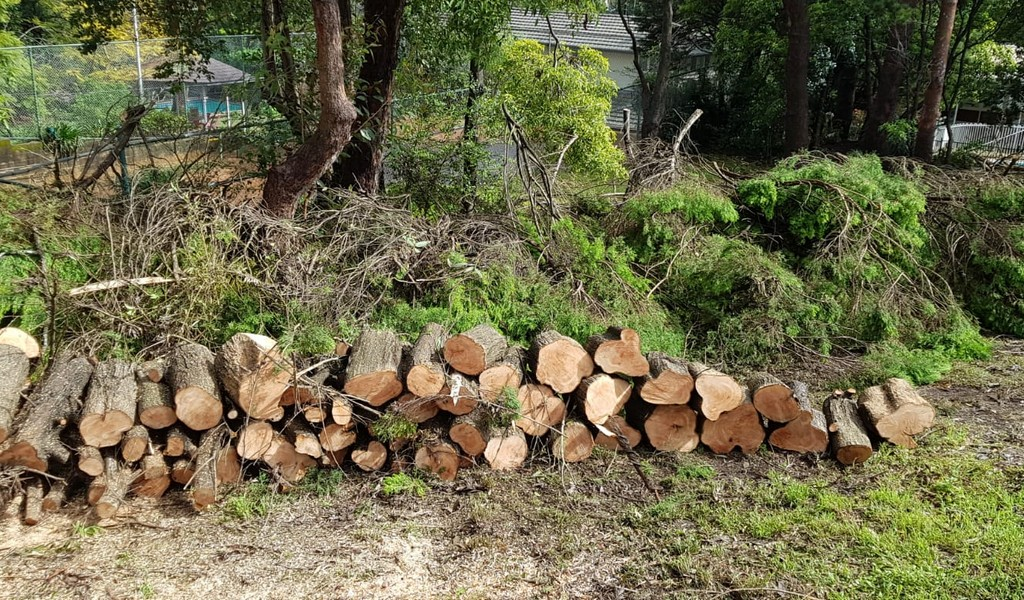 What kinds of qualities you should check in a tree removal expert?