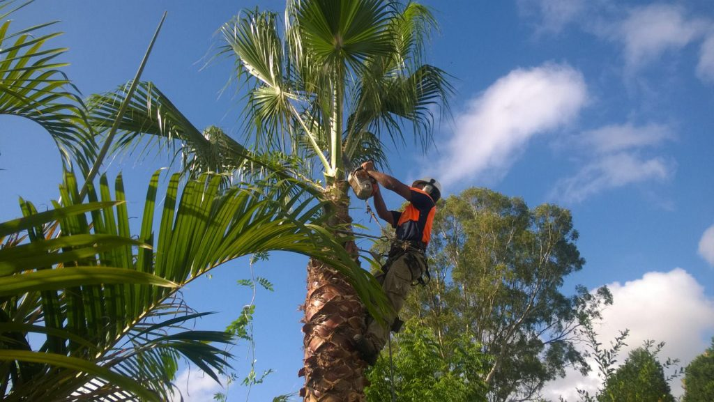 Reasons to hire professional tree services