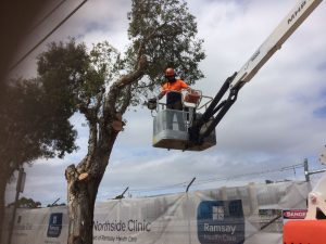 Details to Find in a Professional Tree Removal Company