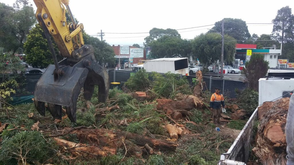 Finding a Safe Tree Removal Expert